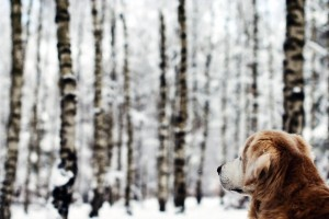 free dog photos download