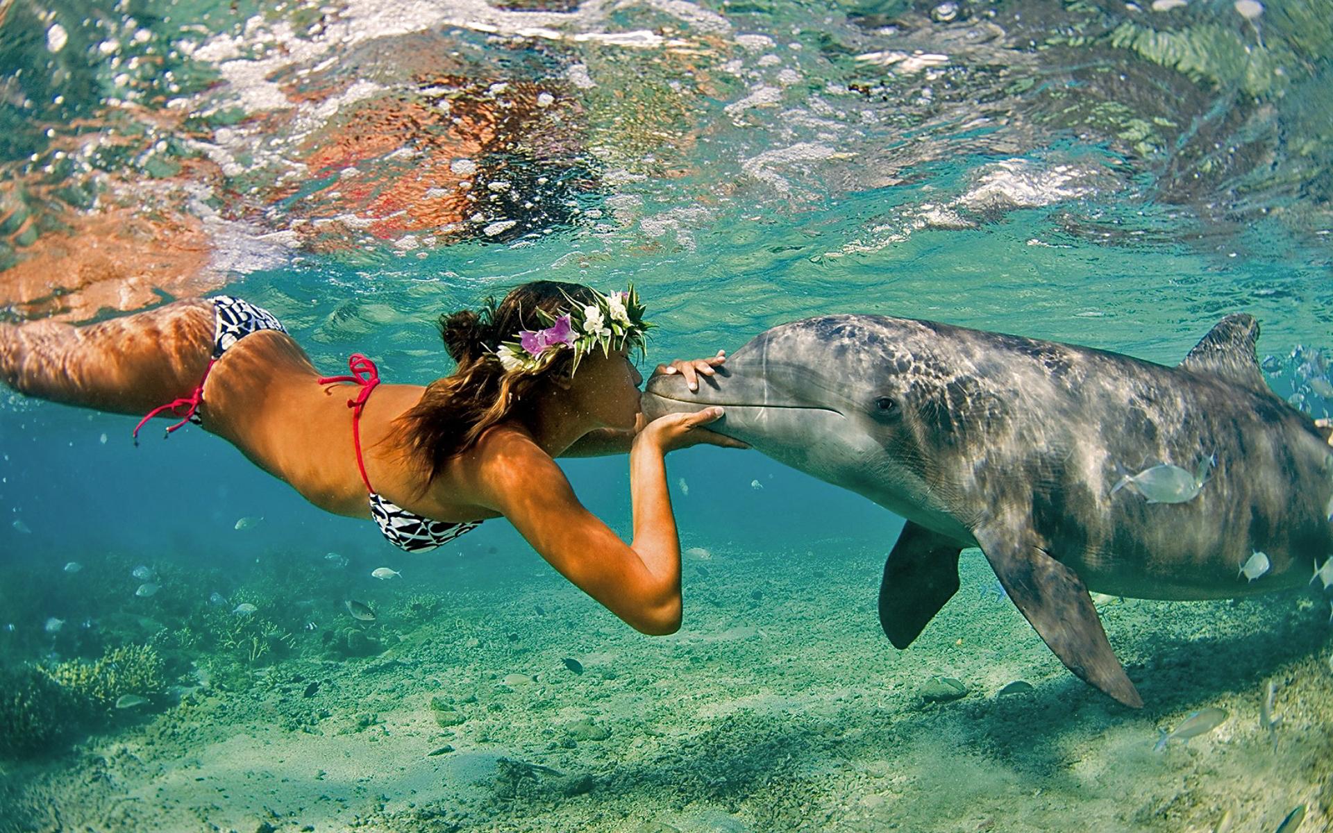 free dolphin wallpaper