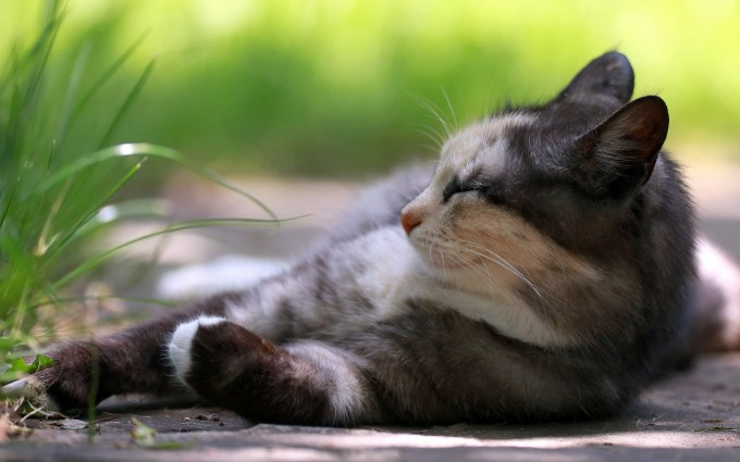 free download cats wallpapers