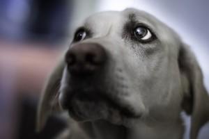 free download dog photos