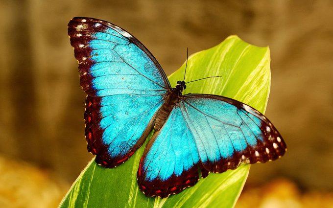 free download hd butterfly wallpaper