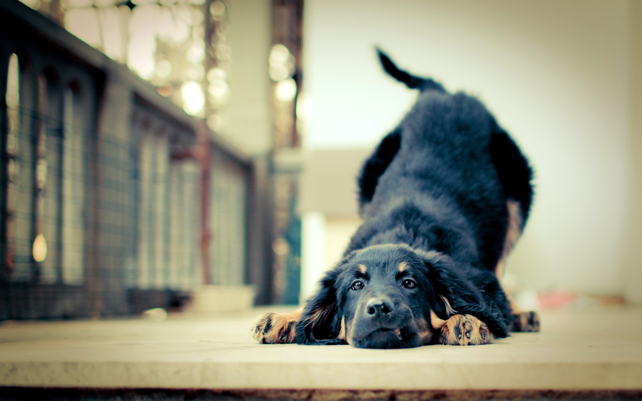 free download images of dogs