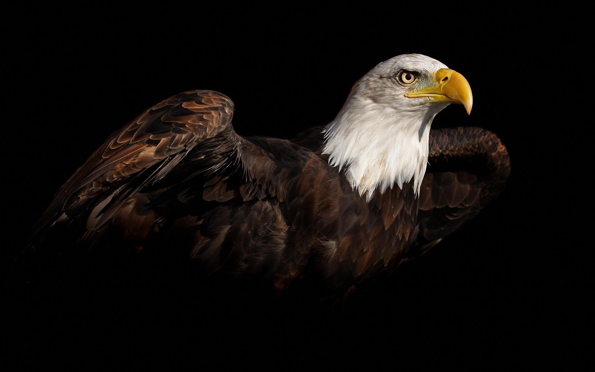 free eagle wallpaper