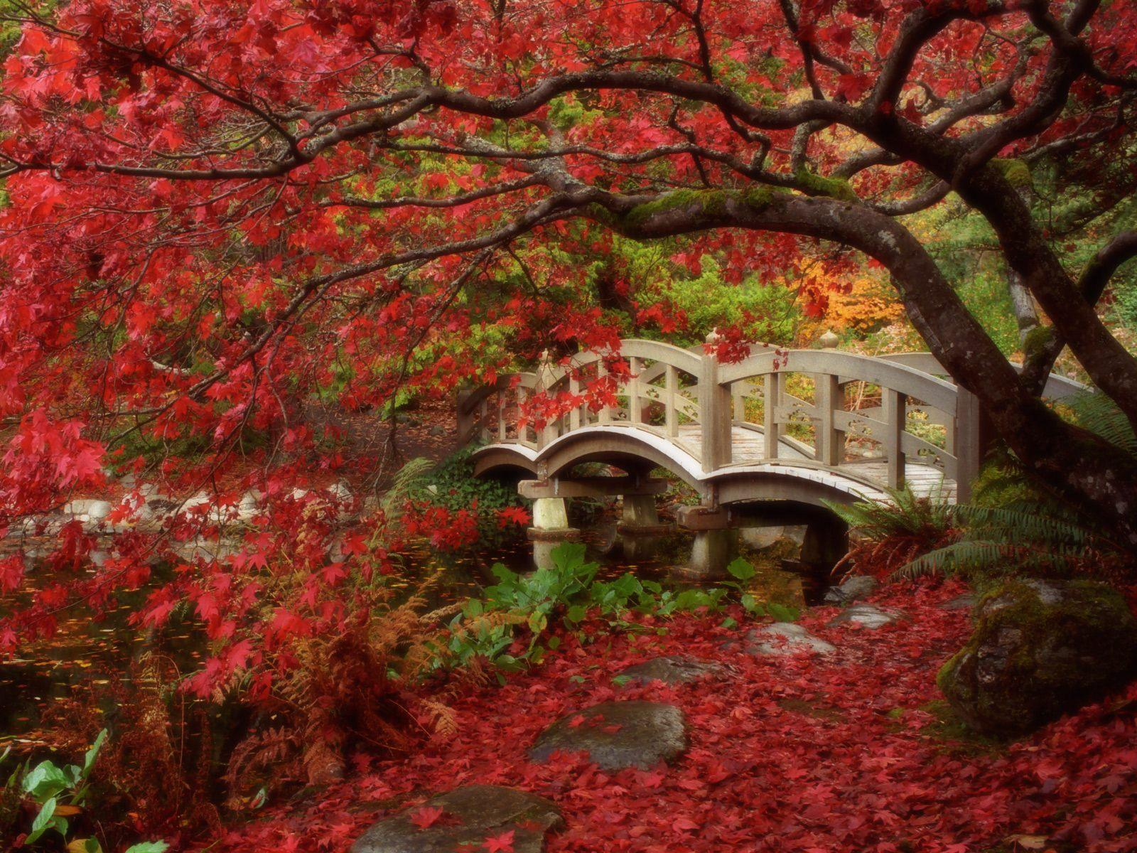 free fall foliage wallpaper
