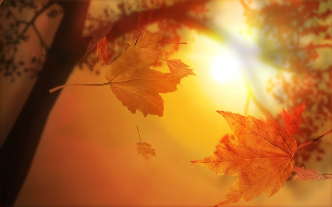 free fall pictures for desktop