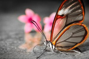 free images of butterflies