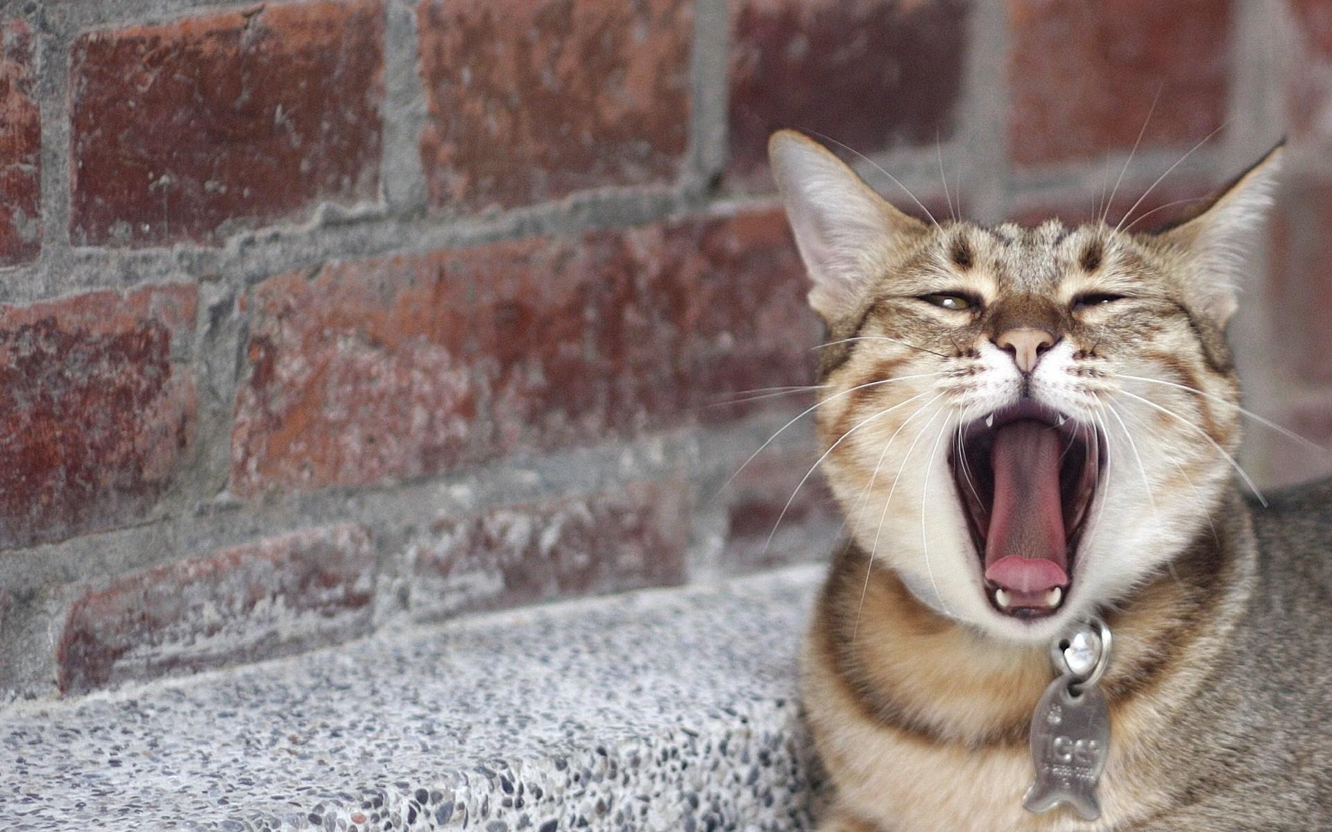 free kitten desktop wallpaper