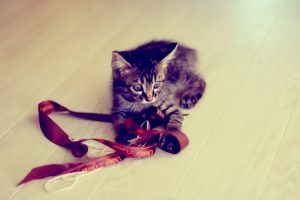 free kitten wallpaper download