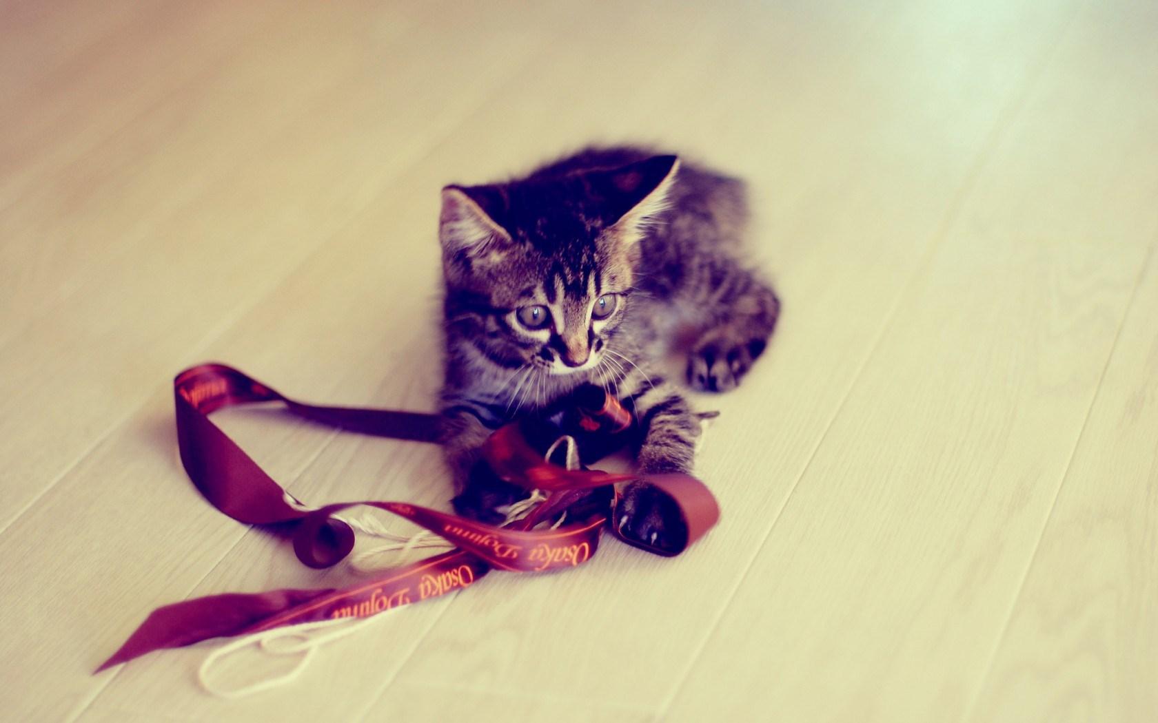 free kitten wallpaper download