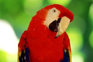 free parrot pictures