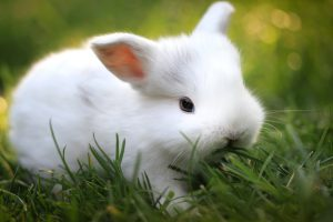free rabbit images