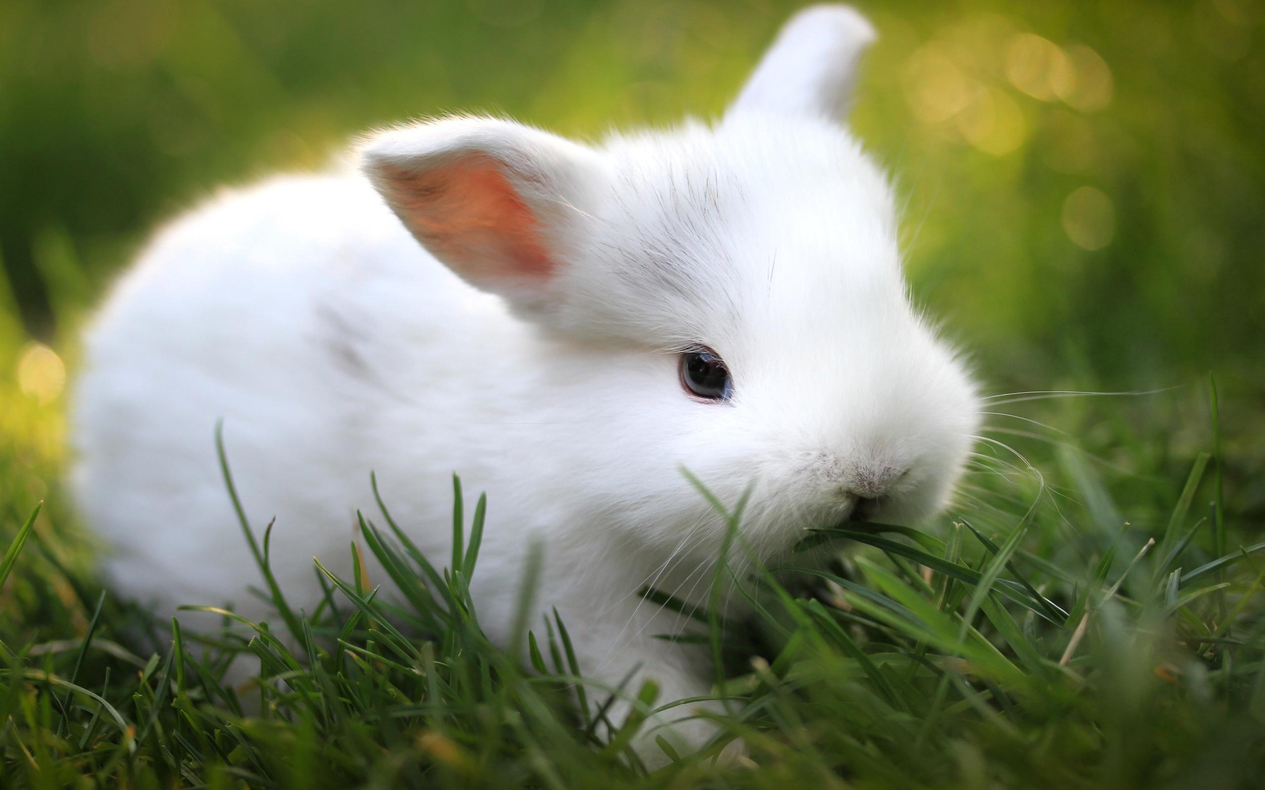 free rabbit images