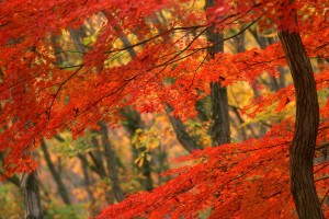 free wallpaper autumn