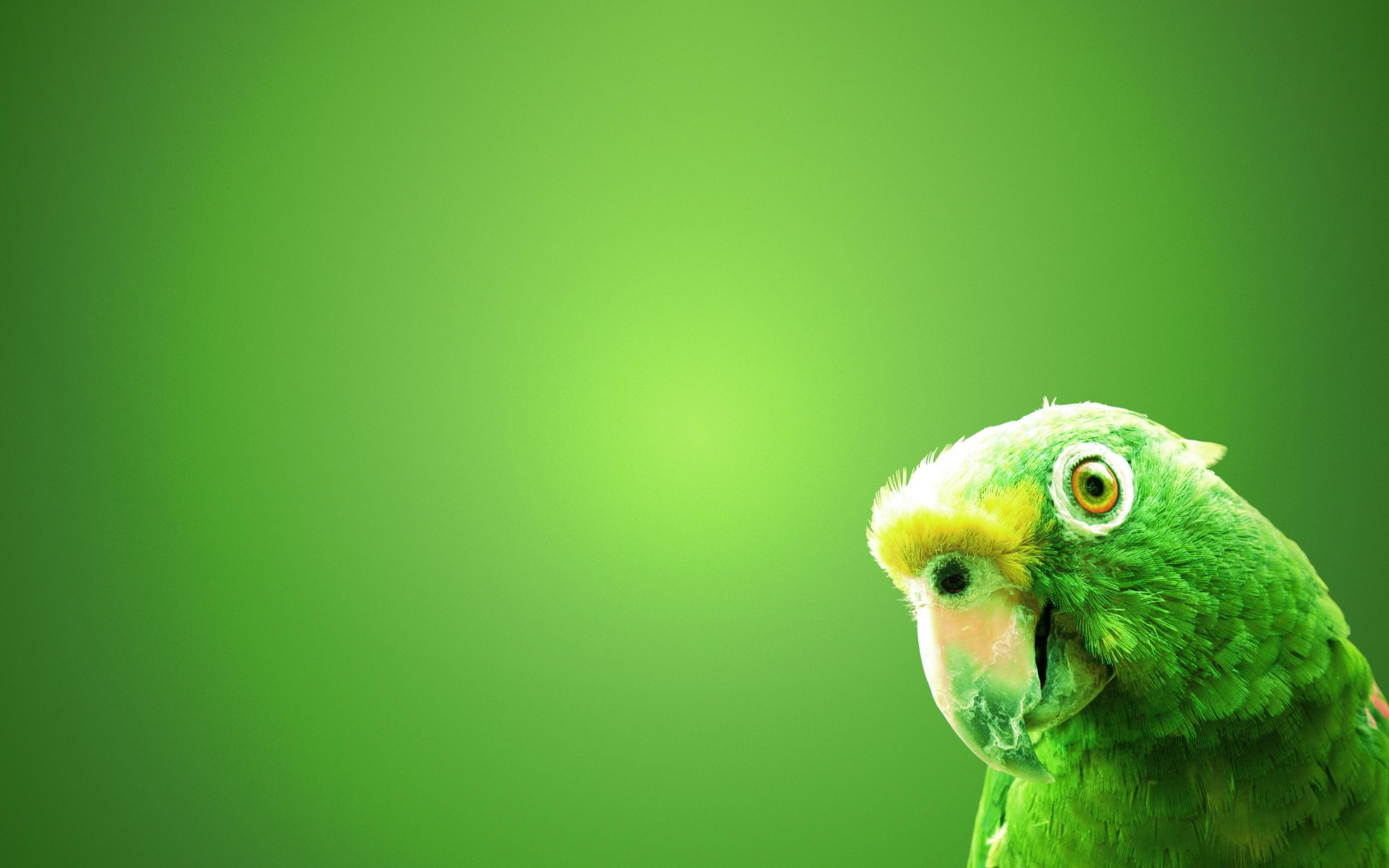 free wallpaper bird