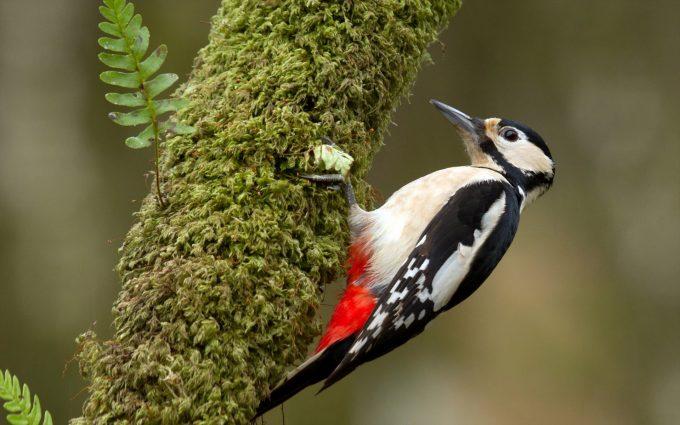 free wallpaper birds