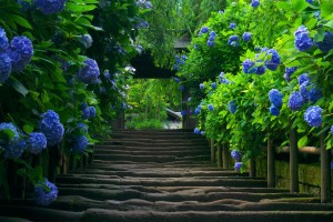 free wallpaper garden