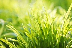 free wallpaper grass