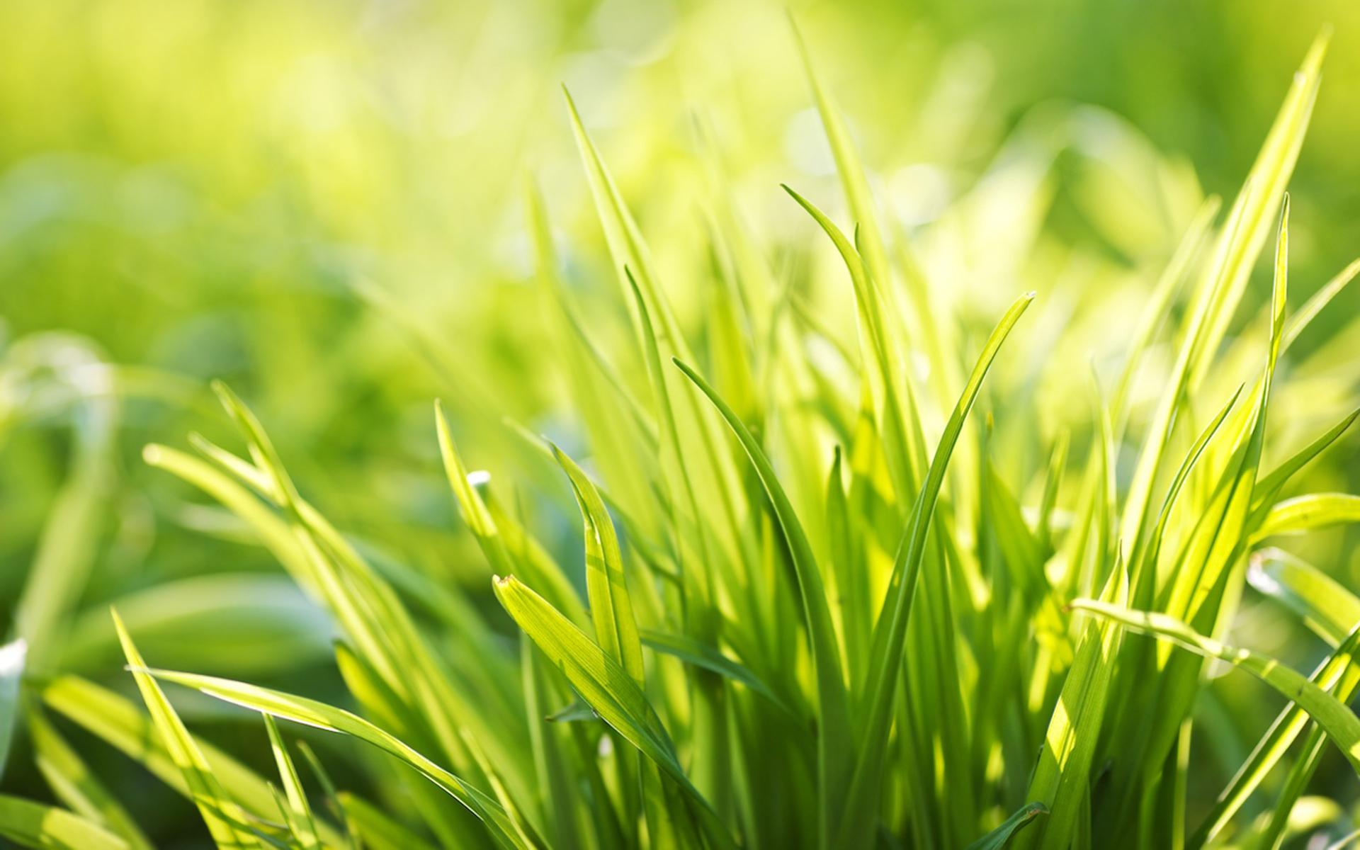 free wallpaper grass