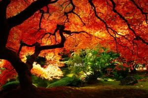 free wallpaper nature