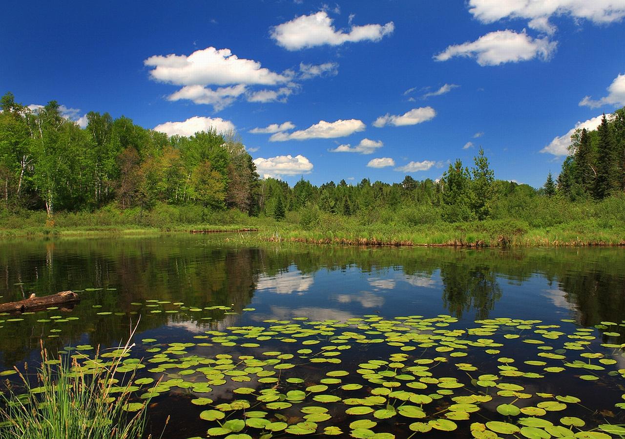 free wallpaper pond