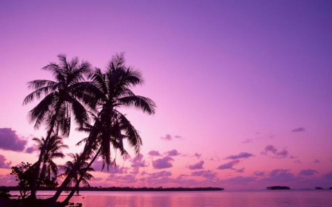 free wallpaper purple