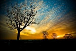 free wallpaper sunset