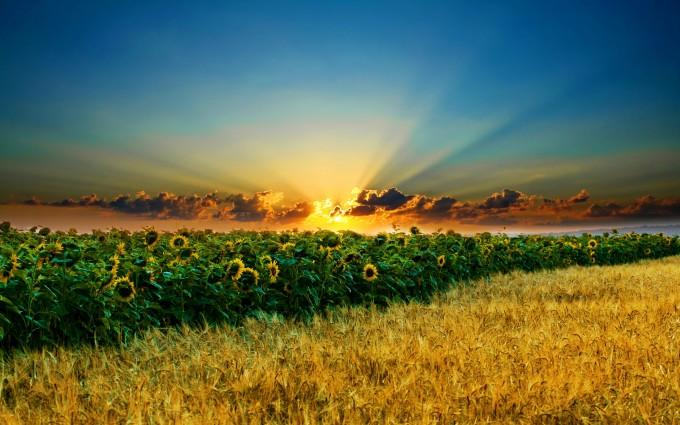 free wallpaper sunset landscape