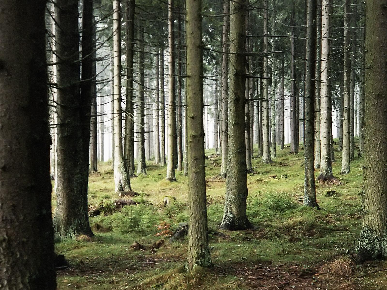 free wallpaper woods