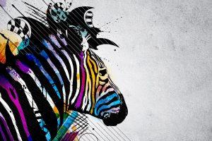 free wallpaper zebras