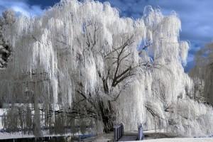 free winter pictures desktop background