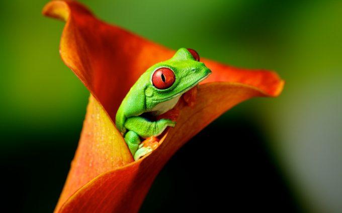 frog flower hd