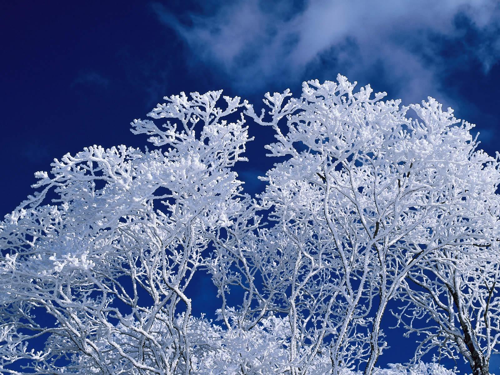 frost wallpaper 1080p