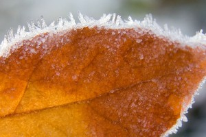 frost wallpaper autumn leaf