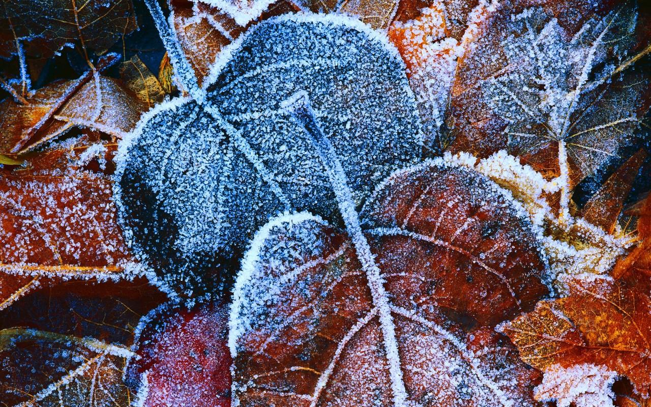 frost wallpaper autumn