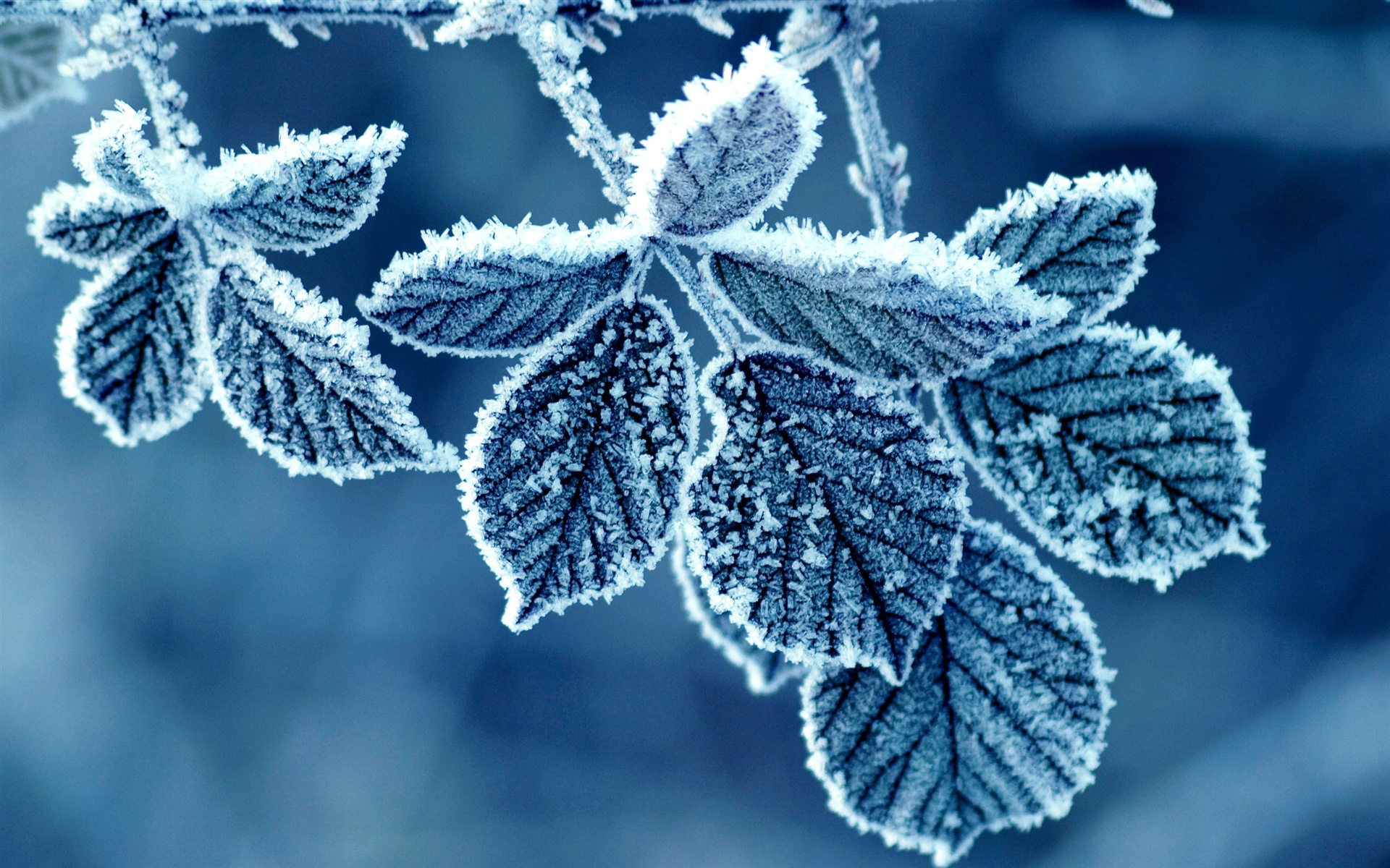 frost wallpaper nature