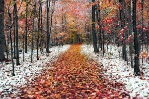 frosty wallpaper autumn nature