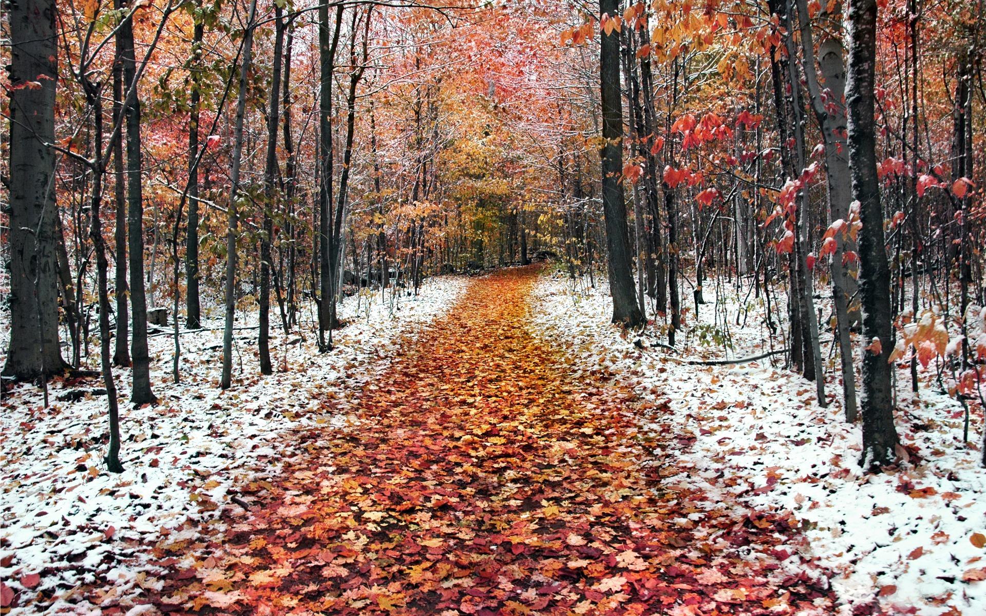 frosty wallpaper autumn nature