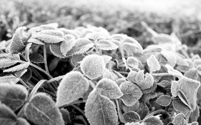 frosty wallpaper free