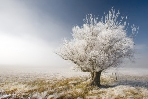 frosty wallpaper snow nature