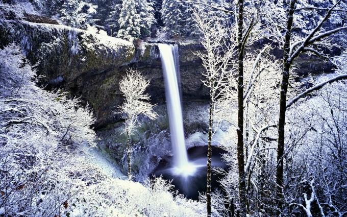 frozen forest background download