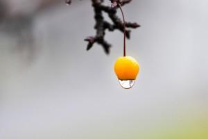 fruit yellow water drop