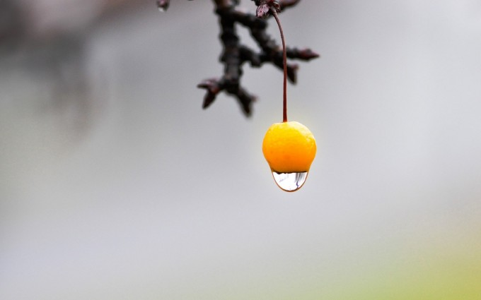 fruit yellow water drop