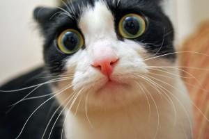 funny cat A1