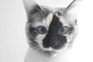 funny cat face hd
