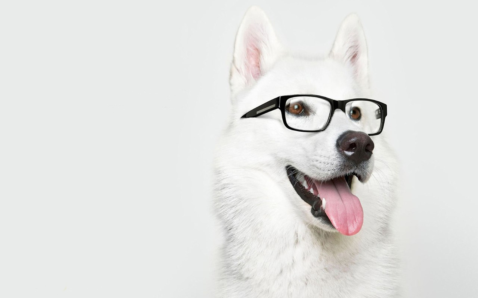 funny dog wallpapers