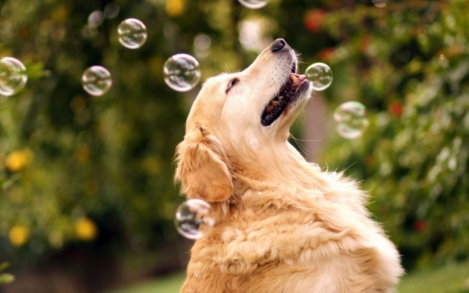 funny dogs wallpaper