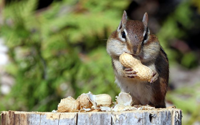 funny images of squirrels