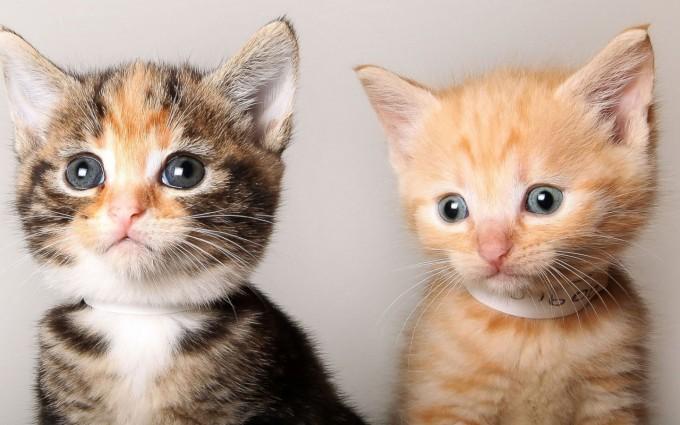 funny kitten wallpapers