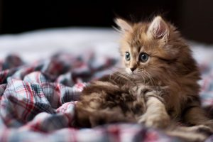funny kitten wallpapers