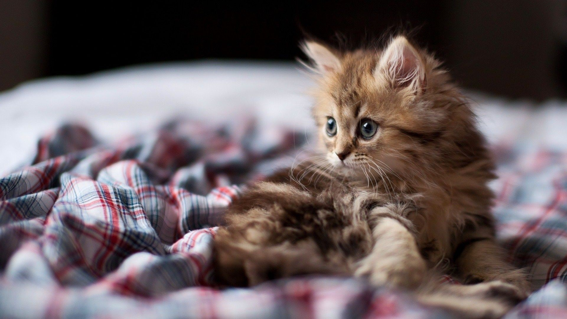 Funny kitten wallpapers hd desktop wallpapers 4k hd - Kitten wallpaper hd ...